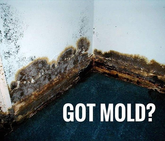 Mold Remediation Mold Myths - Discerning Myth from Facts