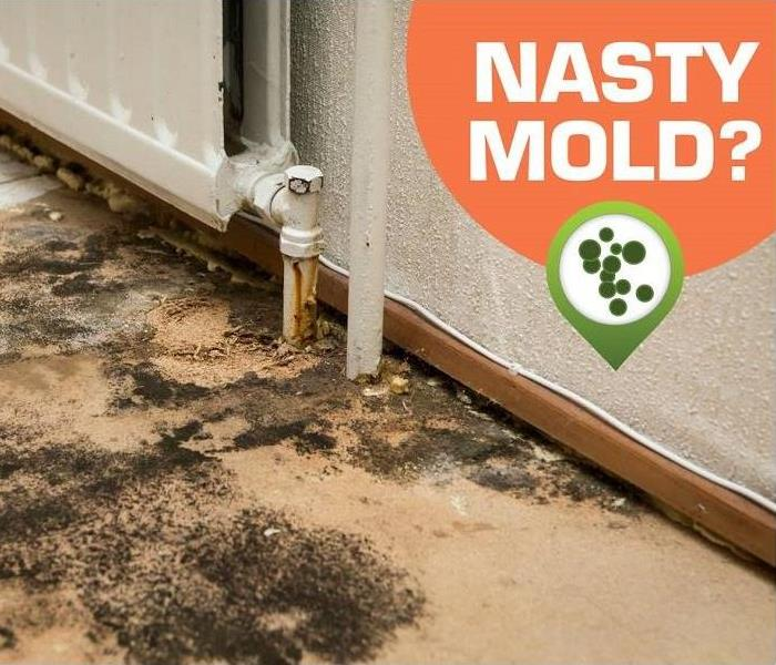 Mold Remediation Where Is The Mold Growing In Your Henderson County Home?
